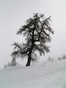 Free Plants And Trees In Snow Stock Photography - 4353842