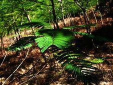 Free Green Foliage Royalty Free Stock Image - 4354076
