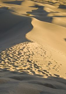 Free Sand Dunes Near Stovepipe Wells, Death Valley Stock Photos - 4354183