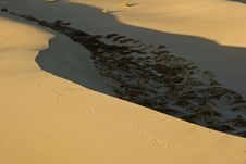 Free Sand Dunes Near Stovepipe Wells, Death Valley Royalty Free Stock Photography - 4354187