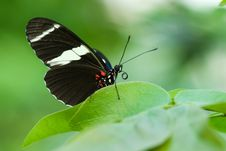 Free Beautiful Butterfly Royalty Free Stock Image - 4354306