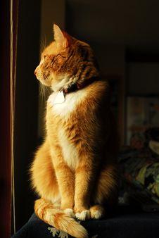 Free Yellow Tabby Cat In Window Stock Photo - 4355170