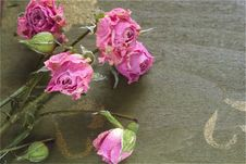 Dried Rose On The Green Wood Table Stock Images