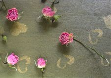 Dried Rose On The Green Wood Table Royalty Free Stock Photo