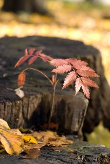 Free Autumn Color Stock Images - 4356114