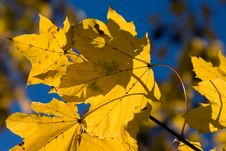 Free Autumn Color Stock Images - 4356244