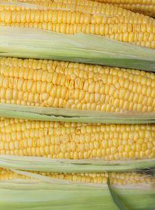 Free Corn Cobs Stock Image - 4357251
