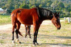 Free Horse Royalty Free Stock Photos - 4357838
