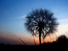 Free Dandelion At The Evening Sky Stock Image - 4358031