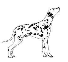 Free Dalmatian Stock Photo - 4358170