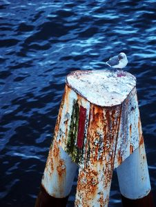 Free Seagull On Pillar Stock Images - 4359904
