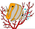 Free Butterfly Fish Royalty Free Stock Photo - 4361085