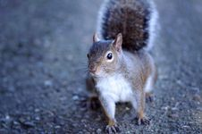 Free Cute Squirrel Stock Images - 4360214