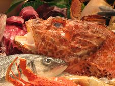 Free Fish To Be Cooked Royalty Free Stock Photography - 4360717