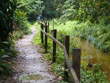 Free Jungle Walk Stock Photography - 4361782
