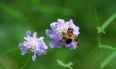 Free Fly And Flower Royalty Free Stock Photo - 4362175