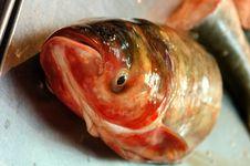 Free Fish Royalty Free Stock Photos - 4364098
