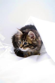 Kitten Playing In Sheet Stock Image
