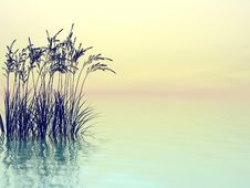 Free Water Grass Royalty Free Stock Photos - 4364568