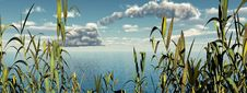 Free Water Grass Royalty Free Stock Images - 4364659