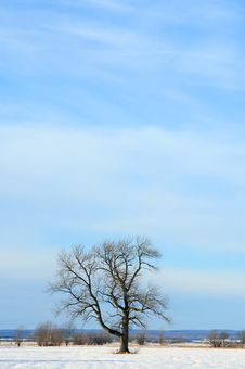 Lonely Tree In A Winter Field Royalty Free Stock Photo
