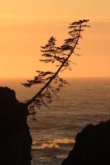 Free Lone Tree At Sunset Stock Photos - 4366733