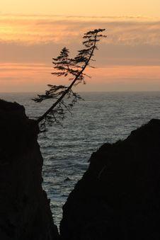 Lone Tree At Sunset Stock Photos