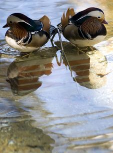 Free Mirror Image Royalty Free Stock Images - 4368489