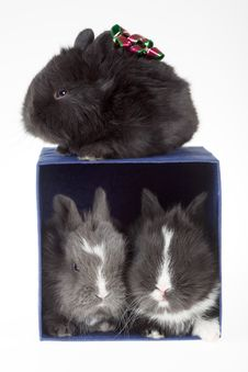Free Three Bunny And A Blue Gift Box Stock Images - 4369224