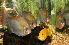 Free Aquarium Samples. Royalty Free Stock Image - 4369796