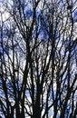 Free Trees View Upwards Stock Photos - 4377213