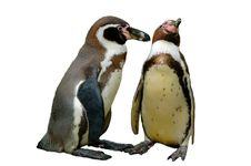 Free Penguins In Love Stock Photography - 4370702