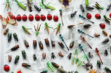 Free Insect Model Stock Photos - 4371213