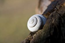 Free Snail Shell Stock Images - 4373144