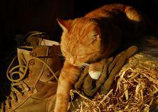 Farm Cat Stock Photos