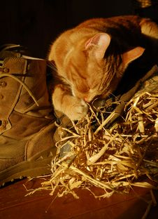 Farm Cat Stock Photography