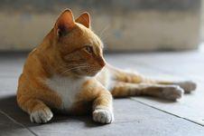 Free Cat Sunbathing Stock Photography - 4374392