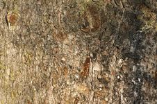 Free Tree Bark Texture Royalty Free Stock Images - 4375249