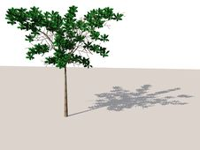 Free Tree With Shadow Royalty Free Stock Photo - 4375495