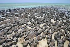 Free Australian Cost Reefs Royalty Free Stock Image - 4375816
