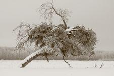 Free Lonely Tree Stock Image - 4376301
