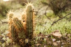 Free The Prickly Cactus Stock Images - 4377214