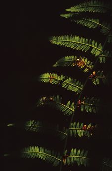 Free Fern Leaves Detail Royalty Free Stock Photo - 4377325