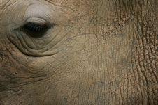 Free African White Rhino Stock Photos - 4377383