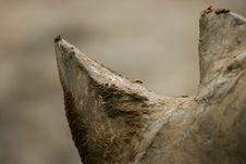 Free African White Rhino Stock Photo - 4377390