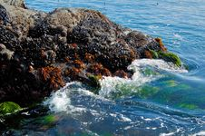 Rocks With Sea Grass Stock Photo