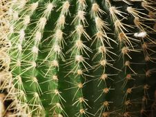 Free Cactus Plant Stock Photography - 4378462
