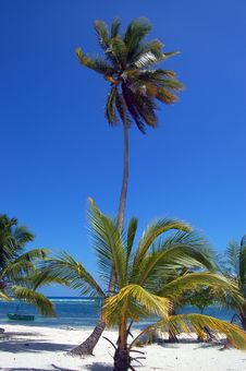 A Tropical Beach With A Palm Royalty Free Stock Images