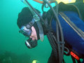 Free Canadian Scuba Diver In BC Stock Photography - 4382532