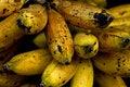 Free Ripe Bananas Stock Image - 4387091